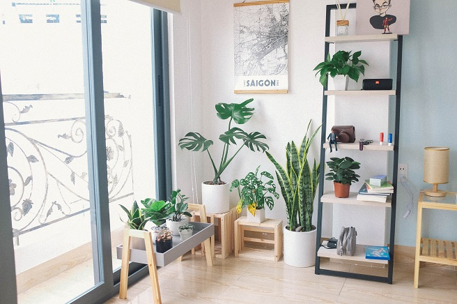 House plants on floor and shelf near window